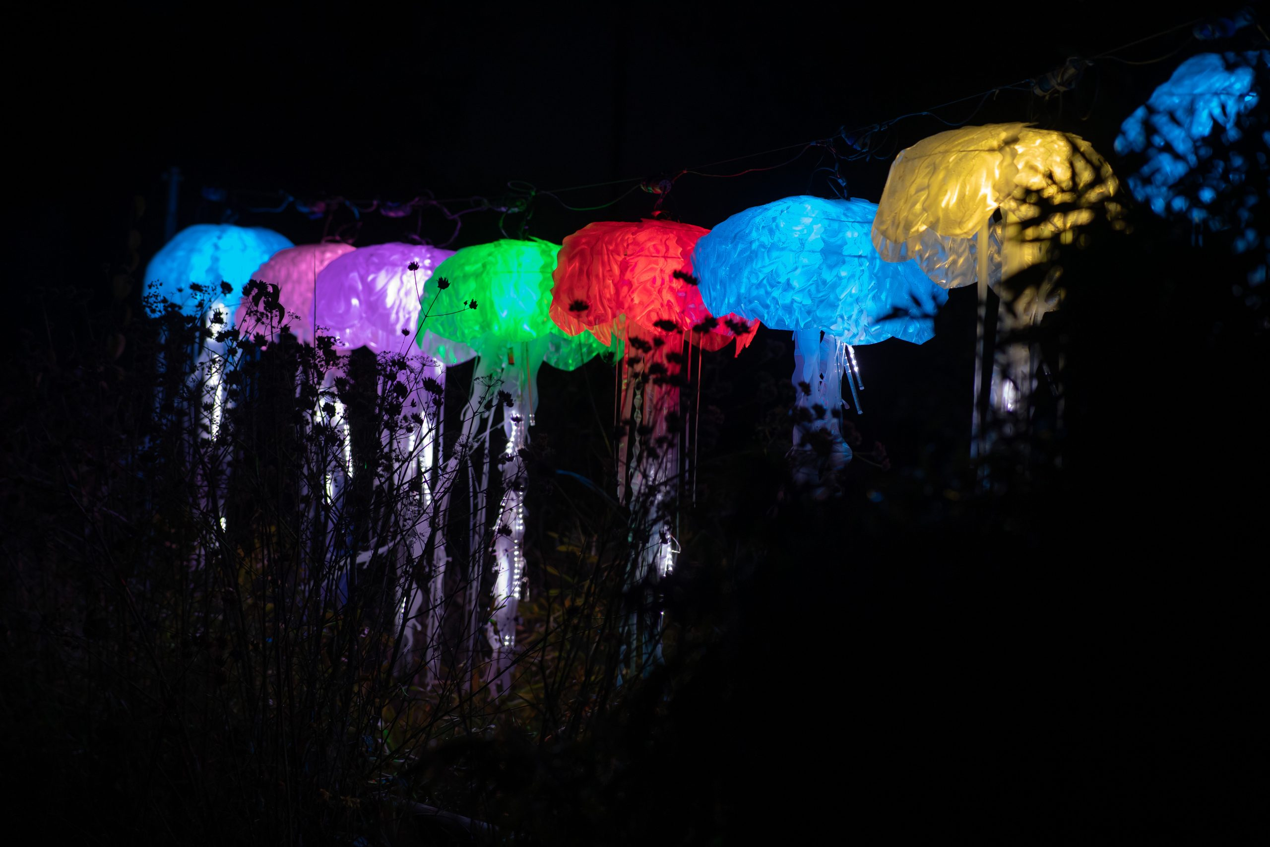 chester zoo lanterns, chester zoo Christmas lights 2020