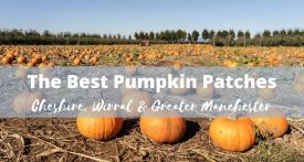 pumpkin pick cheshire, pick pumpkins manchester, pick pumpkins wirral