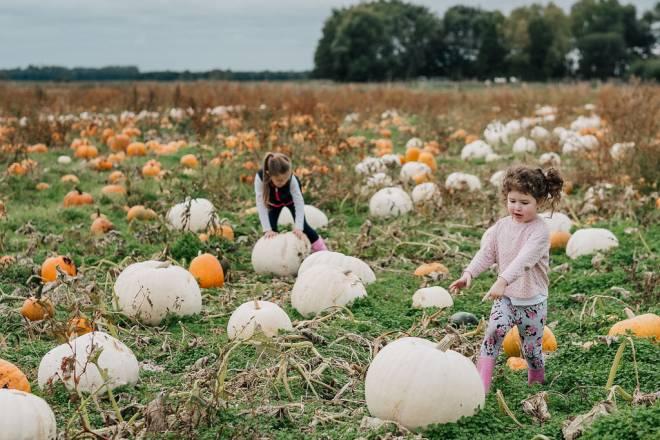 windmill animal farm pumpkins