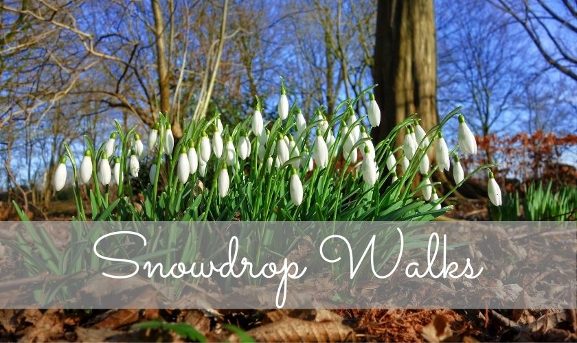 snowdrop walks england, snowdrop walks uk, where to see snowdrop displays, when do snowdrops flower, family walks uk
