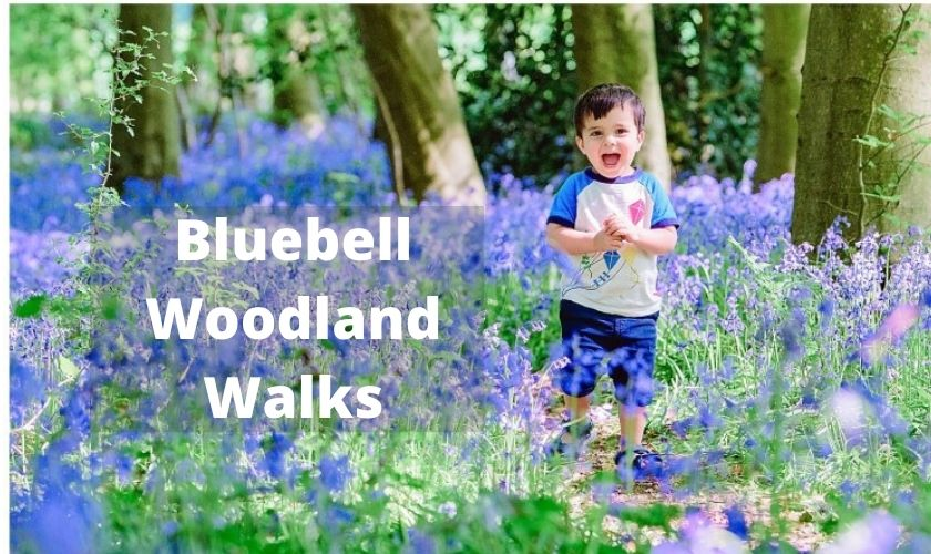 blubell walk england, best bluebell woodlands england, where to see bluebells in england