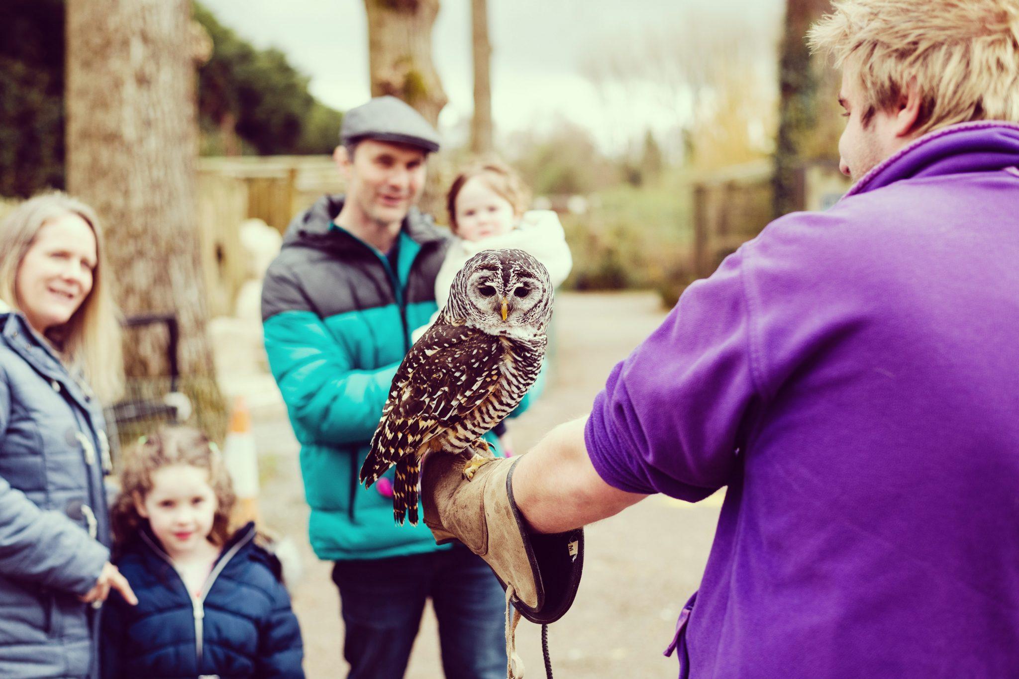 Birdland gloucestershire, birdland cotswolds, family fun cotswolds
