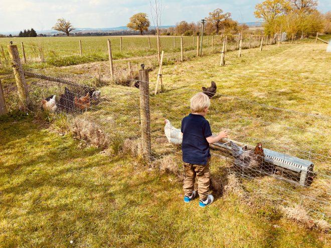 fernygrove farm cafe, bracknell farm shop, child friendly cafe bracknell