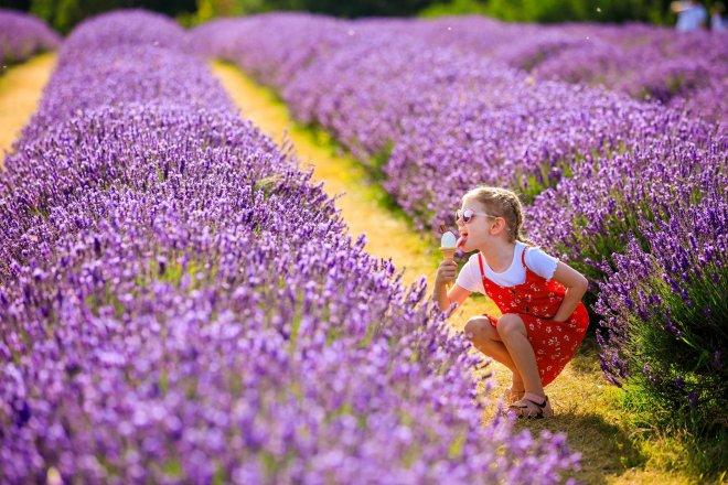 mayfield lavender field, surrey lavender fields, visit lavender fields surrey