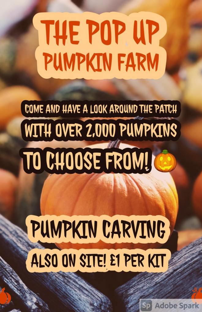 pumpkin picking aylesbury, pumpkin patch aylesbury, pumpkins bucks goats centre