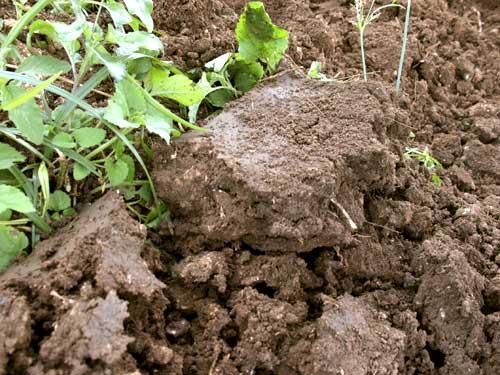 Wet soil clumps