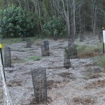 Area restored by Council to replace trees cleared illegally