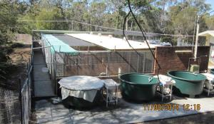 Kennels about to be upgraded by Redland City Council