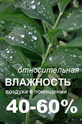 влажность воздуха и красота