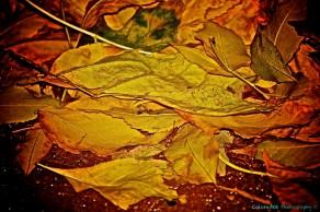 I. Love. Fall.