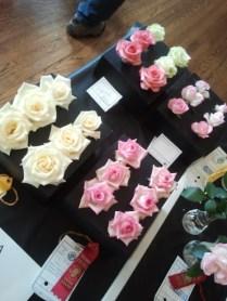 English Box Miniatures & Miniflora Roses