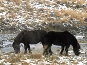 364-horses
