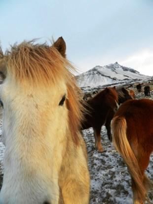 384-more-horses