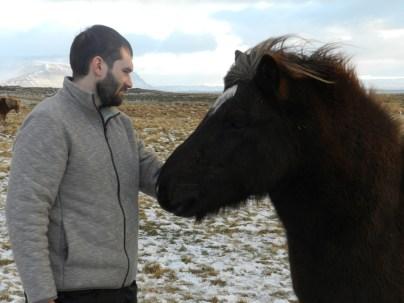 386-more-horses