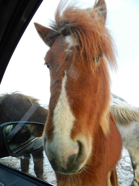 393-more-horses