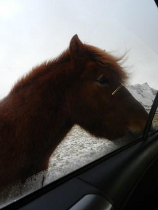 394-more-horses