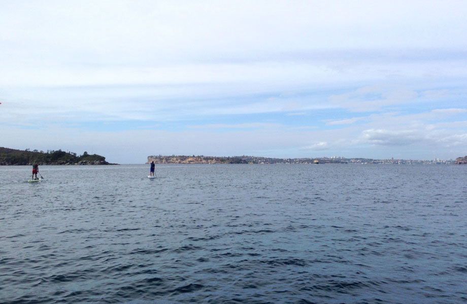 two paddle boarders head out of Manly bay Australia
