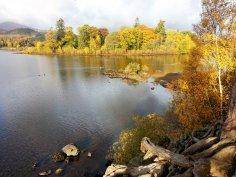 Golden Derwentwater