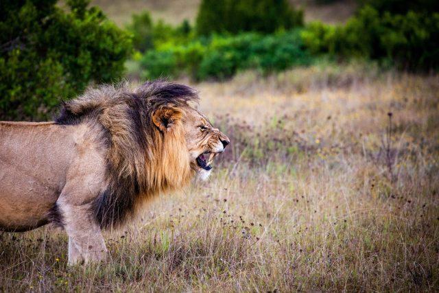 angry-animal-carnivorous-162093.jpg