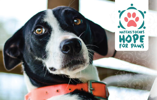 Hope for Paws2