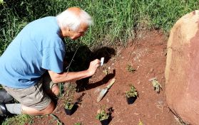 Rick Brune sets out some of the new plants in selected locations for planting. June 6, 2015.