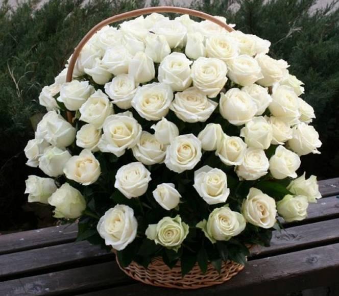 Korpa 101 ruža 2