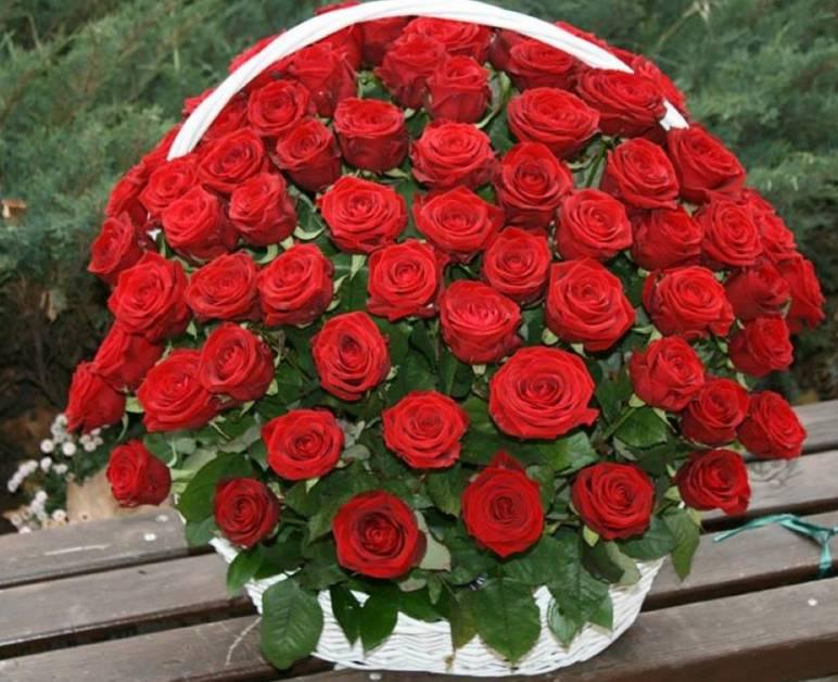 Korpa 101 ruža 6