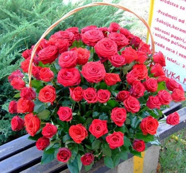 Korpa 101 ruža 10