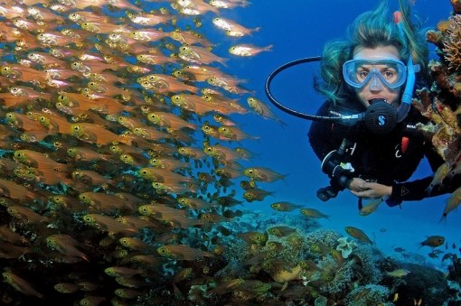 Special Offer PADI E-learning €199