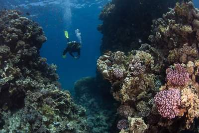 Red Sea Sharm el Sheikh