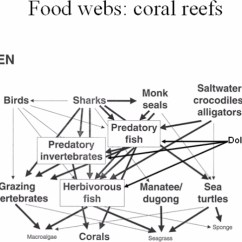 Coral Reef Food Chain Diagram 4 Way Switch Wiring Diagrams 3 Switches Web Red Sea Picture