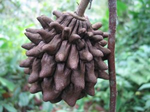 red de guardianes de semillas ecuador permacultura
