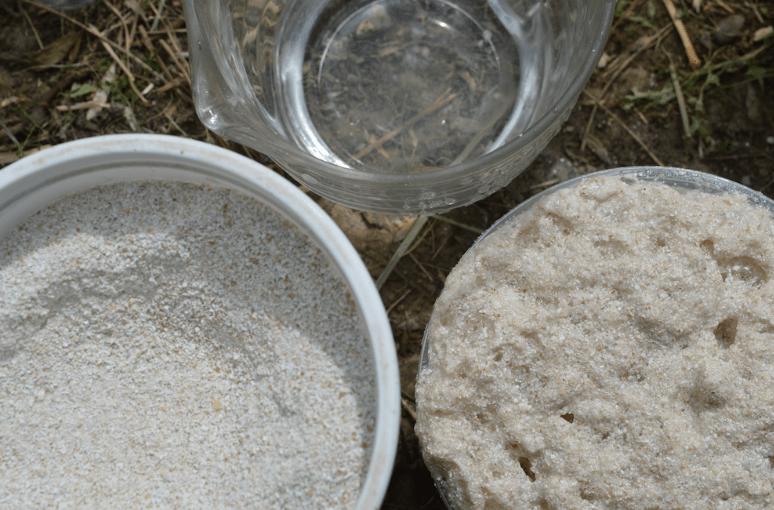 calcio red de guardianes de semillas ecuador agroecologia permacultura organico