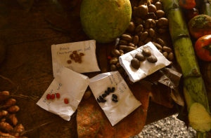 red de guardianes de semillas ecuador venta de semillas orgánicas