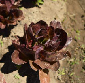 red de guardianes de semillas orgánicas ecuador