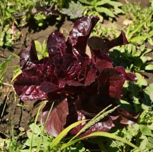 Red de Guardianes de Semillas Orgánicas ecuador venta de semillas