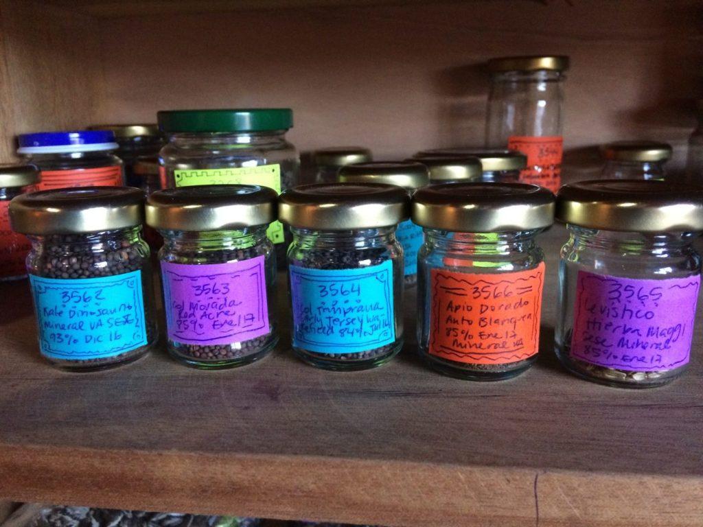 semillas en frascos red de guardianes de semillas ecuador