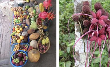 guaycuyacu red de guardianes de semillas ecuador