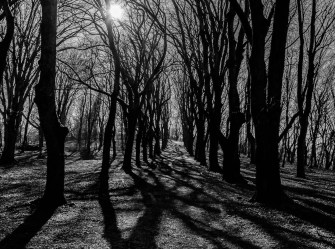 redshooters-2013-2014-paysage-Tree
