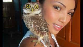 Small Owl Tattoos