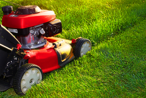 how-often-mow-lawn