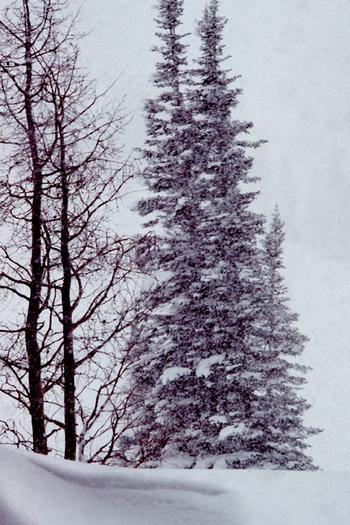 snowy_trees