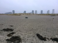 Amager Strand (beach)