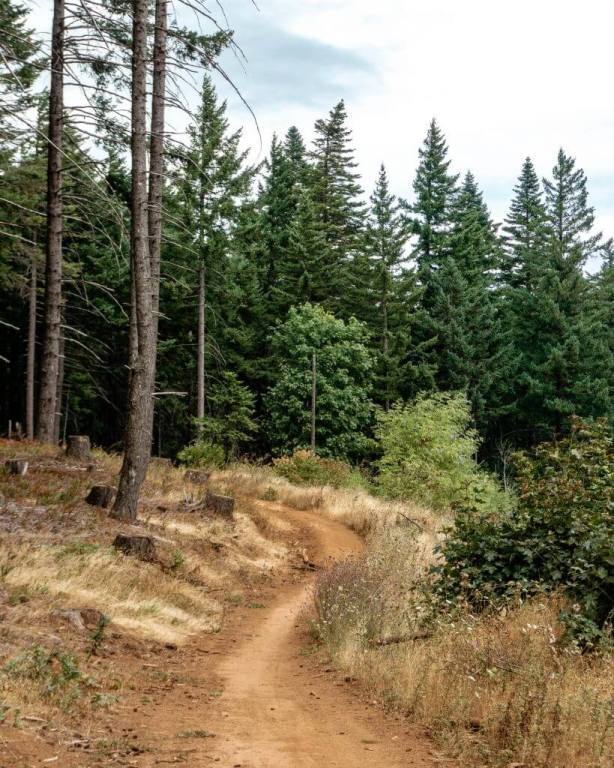 Mountain Biking trail in Hood River, Oregon.