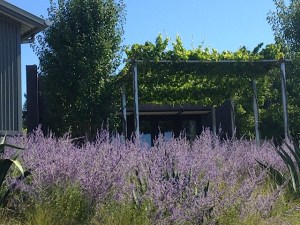 The grounds at Paul Hobbs winery