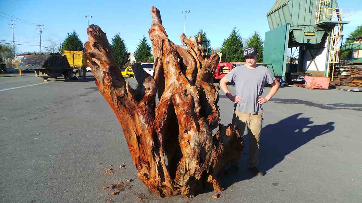 8 Ft. Tall Redwood Real Wood Landscape Roots
