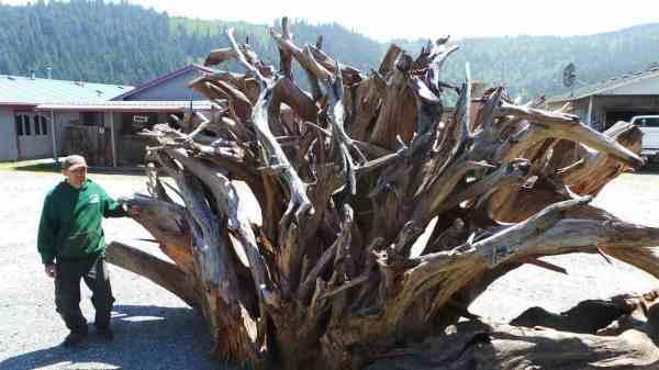 redwood landscape pieces archives