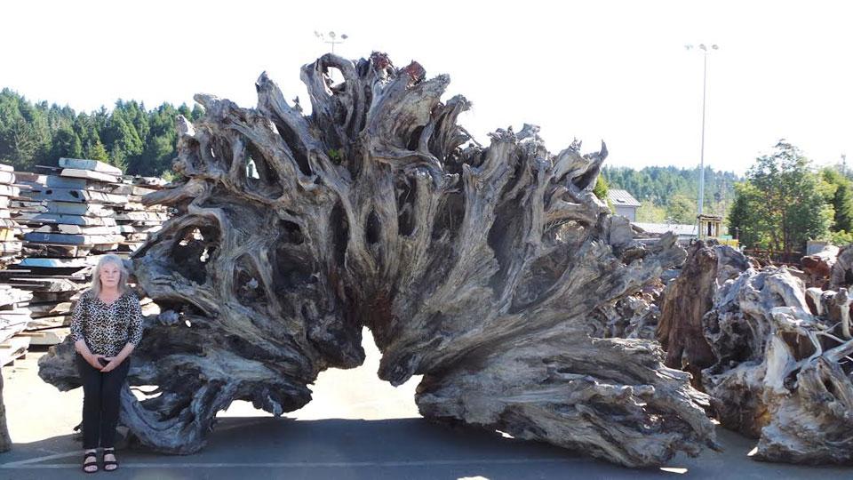 Redwood Landscape Pieces