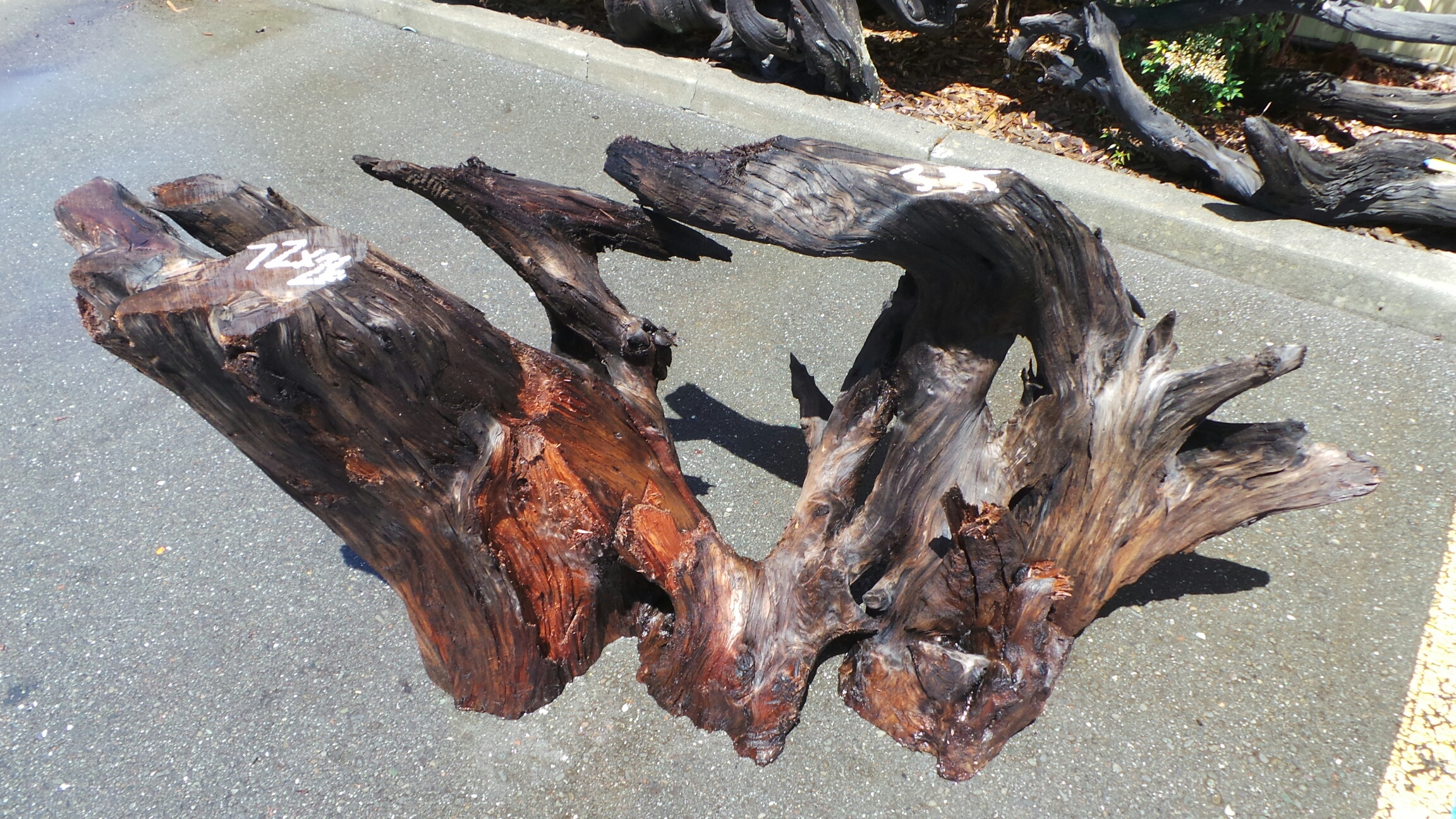 Root Table Bases - Redwood Stumps for Sale