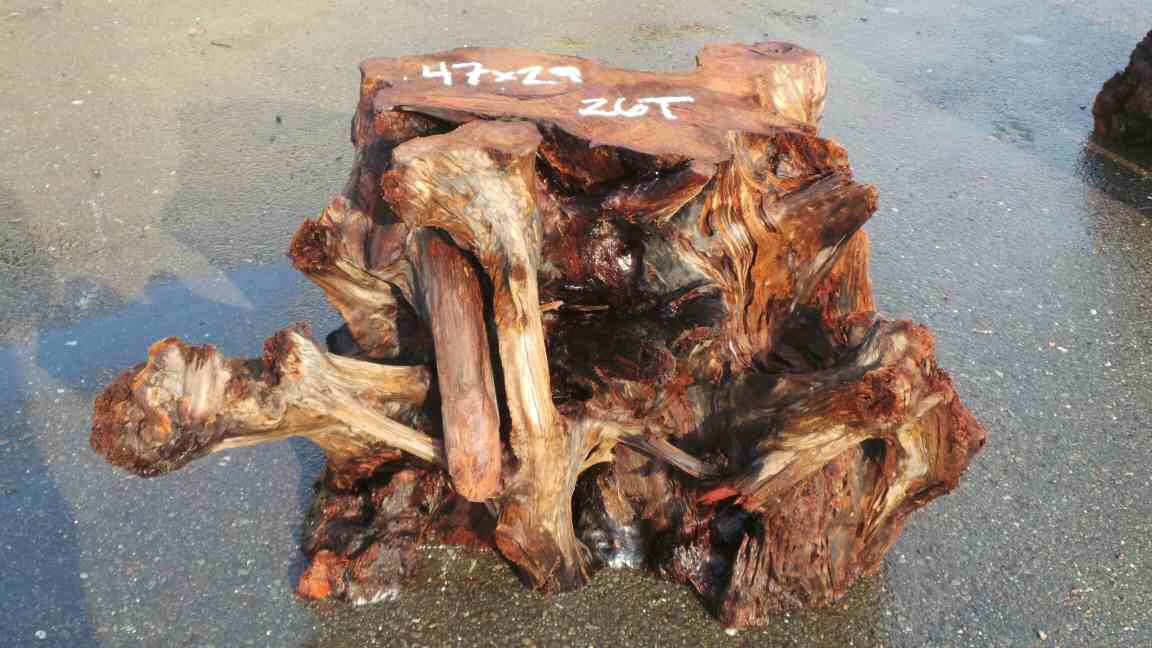 Redwood Root Base - Outdoor Tree Stump Landscaping Ideas